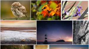 Want to store and share photos on Flickr? What you need to know